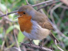Happy litte fella... singing just for me?