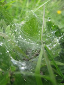 Rain drops and webs... al-la Firefly... second from the top on the blogroll...