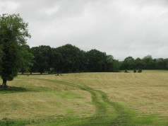 #21 - the darker green seems to accentuate the path down the mown pasture...
