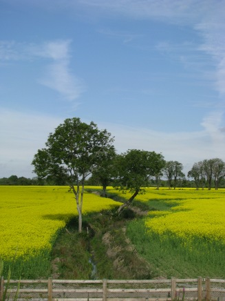 Yellow - Blue sky... yellow sea? Ireland gone wonky? Where's our grey sky and greyer sea? ;-)
