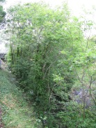 The foot bridge at Kilpatrick Bridge (Coolmine Station) comes into view, note the rock wall... lower right side...
