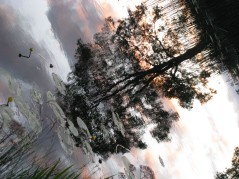 Sunset reflections... trees and water... peace...
