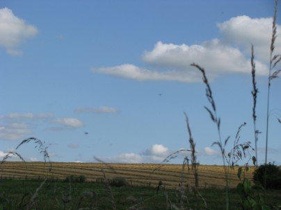 Blue sky - Harvested barley... spot the slither of sunlight, the speck of the plane... and the smear of the bird. ;-)