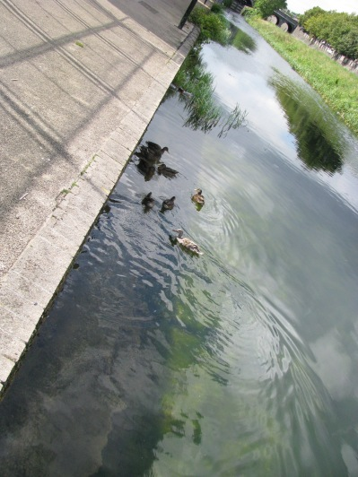 ... and for effect... we even have ducks!