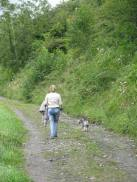 walking in freedom... a quiet Saturday afternoon stroll... Ms E and terry hound wander off along the towpath of the Royal Canal...