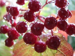 Wet Berries... used on the other blog... go over and look how effective the blog picks up on the colours...