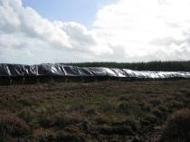 Rows and rows of plastic covered peat...