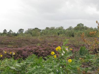 Does this section of bog not look somewhat better... it's most definitly quieter!