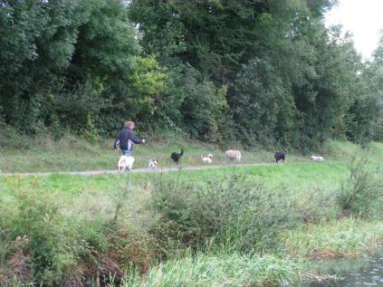 There goes the the dog piper... all 7 of them! We chatted across the canal... our intrepid piper mentioned his stay in SA...