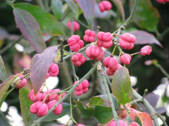 Berries of a different kind... are they edible? I wonder...