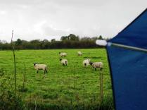 This time it was the turn of the sheep to look at me as if I had seven heads... what's the fellow with the blue umbrella doing out here in the middle of nowhere on a day like today!