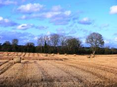 The last of the bales... blue sky allows for some great view.