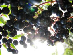 What would a post be without the obligatory berries?