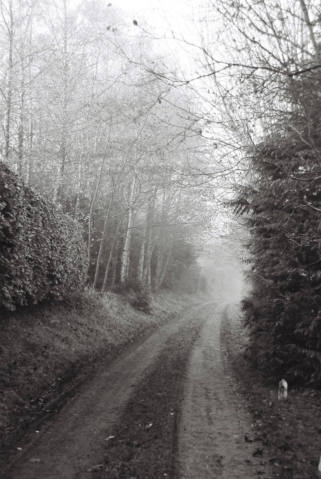 Into the mists of the future we go... my gratitude pic for the week...