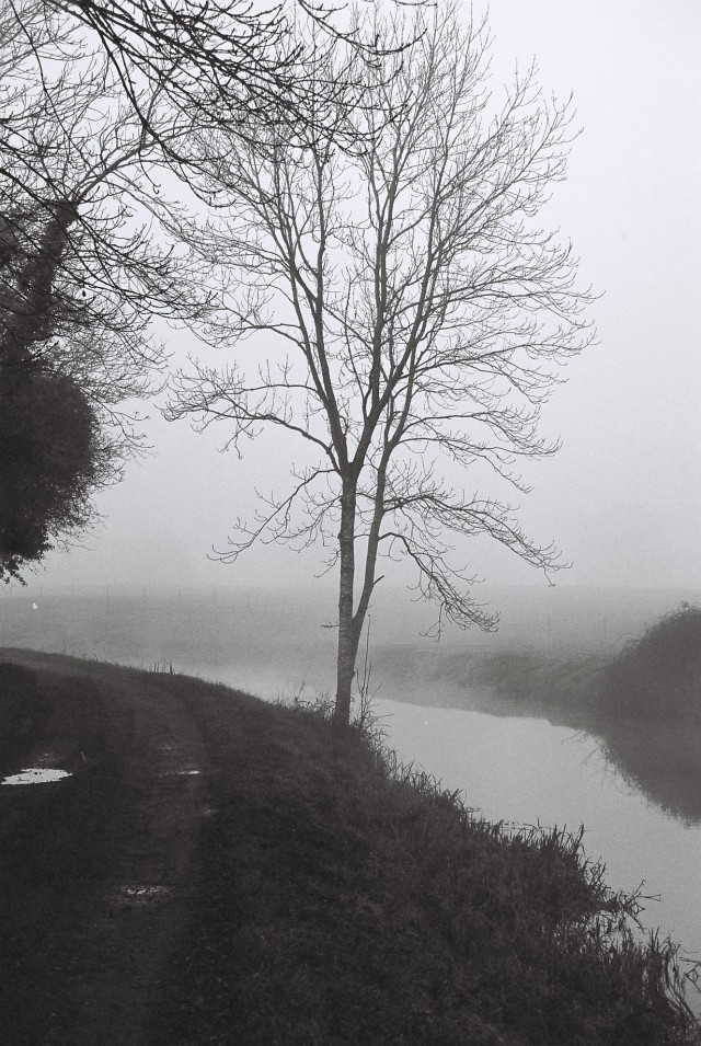 Lone tree in the mist... next to the canal... one of my forever favourite places.