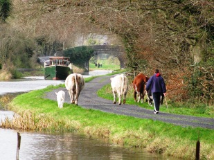 A new meaning to taking the pets for a walk... while others look on from D'Arcy's Bridge in the distance...