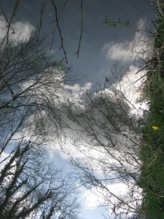 Next time I wander down this wet wonder way it may well be by boat! Spring stroll along the Royal Canal near Furey's...