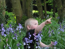 GSA & Bluebells GSA... what do mean look at the bluebells? Look at that! :-P