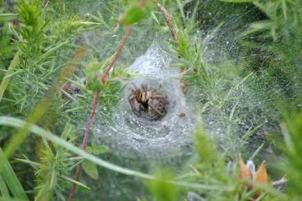 Spiders at work...