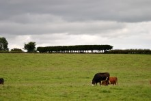 What was that hedge for? Tree henge for the druids? Must be...