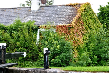 That's a strange colour green the ivy has turned? Too soon the reminders of the turning are appearing...