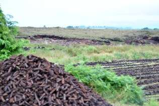 A different crop... peat aplenty...