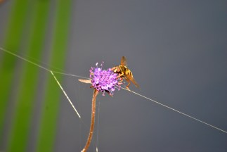 spiderweb and bee...