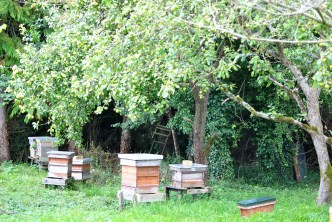 The Beekeeper's garden... a pleasant, alive place to be enjoyed by the family.