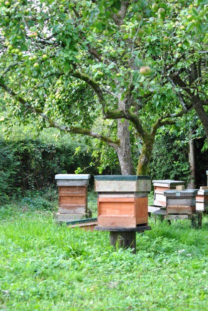 Bees aplenty... great for the flowers and a bit of honey. Healthy hives.