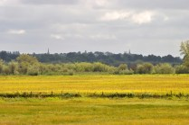 The twin steeples of churches across the pastures, looking south toward Banagher