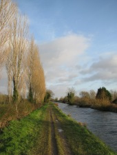 Jan 21 - Royal Canal near Confey Station...