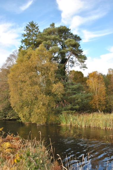 Oct 21 - Autumn colours along the Royal Canal, near Cappa Bog, Ireland