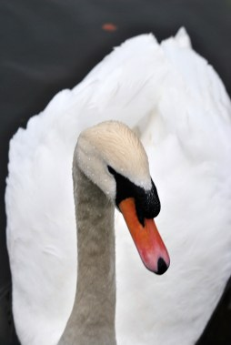 Swan 2 - yes mister... what can I do for you?