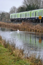 The heron, the swan and the train...