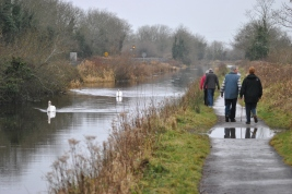 A pair of swans and 2 pairs of puddle jumpers...
