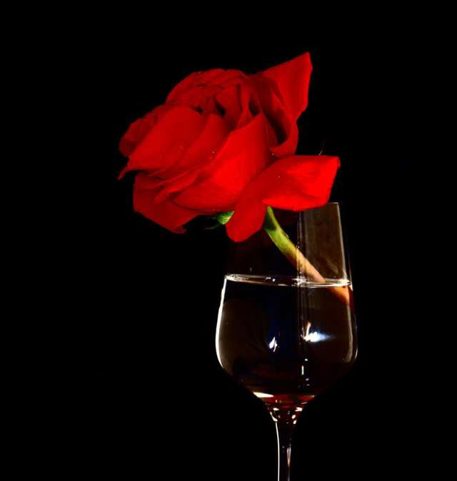 red-rose-with-wine