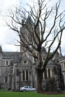Tree and Church... sorry, Cathedral...