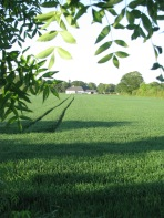 Shadows across a green Meath field