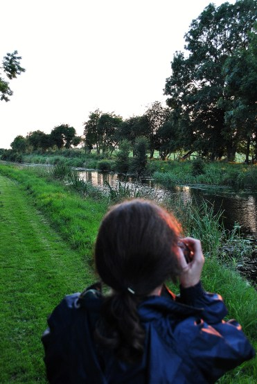 Closer to home? Yep... the GLW capturing the sunset along the road... grass road?Yes! summer bliss along the Royal Canal... some road!