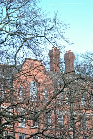Trees and red brick