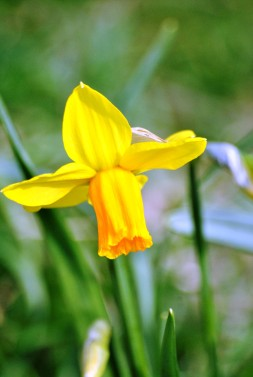 Green and yellow... daff style!!