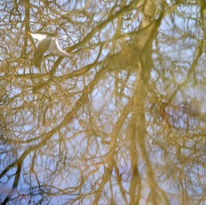 Grand reflections... see the seagull doing a bit of inverted flying...