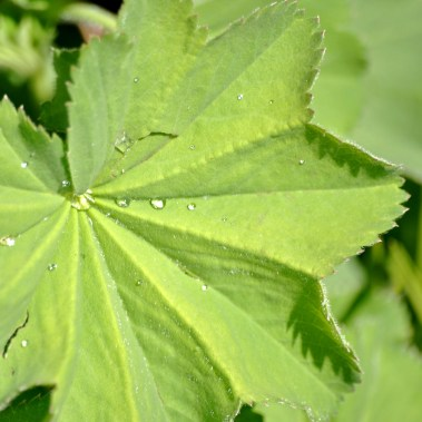 Water droplets on green leaf...