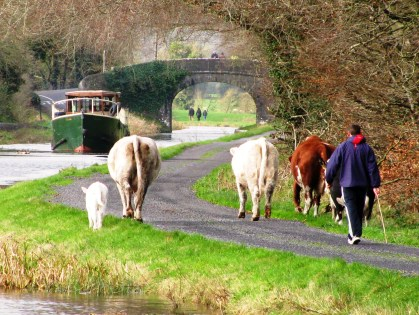 Rambler Rambling... Dec 2011 Royal Canal, Ireland...
