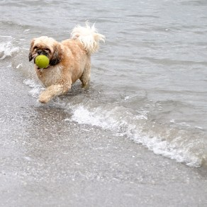 A ball... a beach... a dog. How can't that be play?