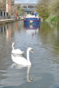 Boats at play on the Royal Canal, Dublin... not that the swans wanted to join the game...
