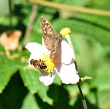 Butterfly and bee... togetherness!
