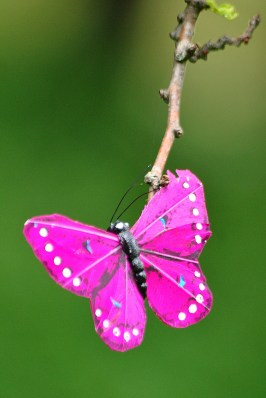Rare St Stephens Green butterfly...