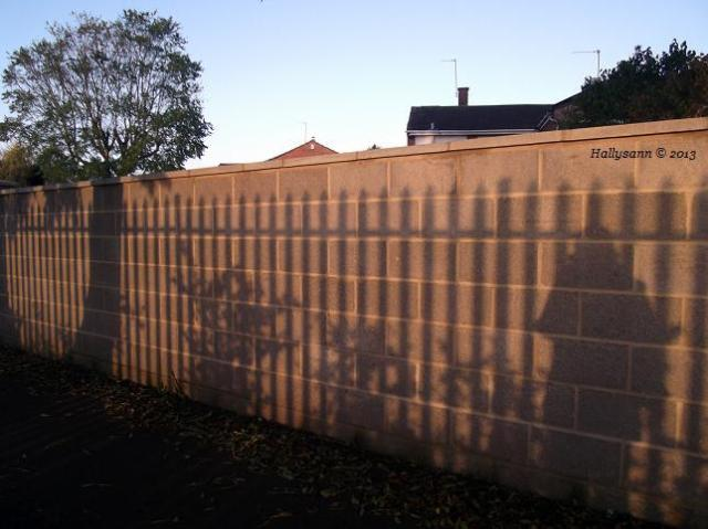 2013-11-morning-shadows
