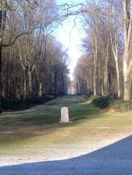 One of the 'Lanes' criss-crossing the wood...